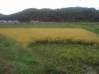 農楽塾稲刈り_d0027486_16253227.jpg