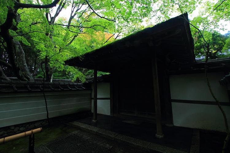 高桐院(大徳寺塔頭)_e0051888_5221563.jpg
