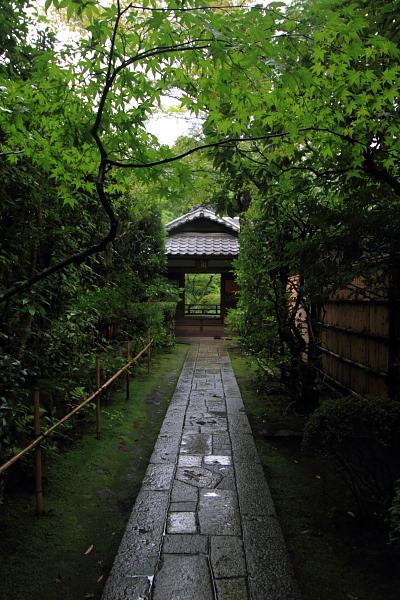 高桐院(大徳寺塔頭)_e0051888_5223013.jpg