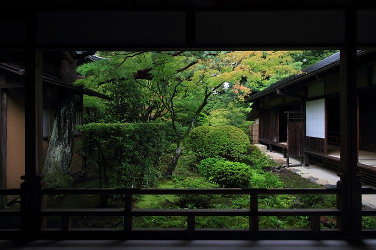 高桐院(大徳寺塔頭)_e0051888_5224790.jpg