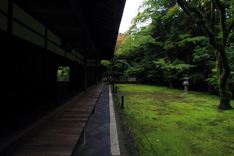高桐院(大徳寺塔頭)_e0051888_5234960.jpg