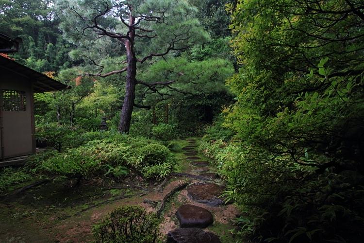 高桐院(大徳寺塔頭)_e0051888_5245490.jpg