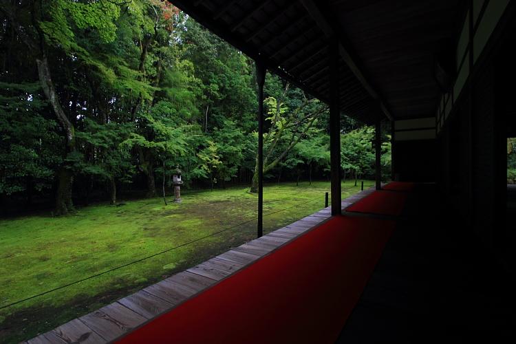 高桐院(大徳寺塔頭)_e0051888_524626.jpg