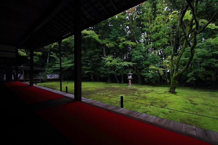 高桐院(大徳寺塔頭)_e0051888_5254667.jpg