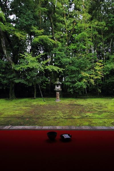 高桐院(大徳寺塔頭)_e0051888_5265773.jpg