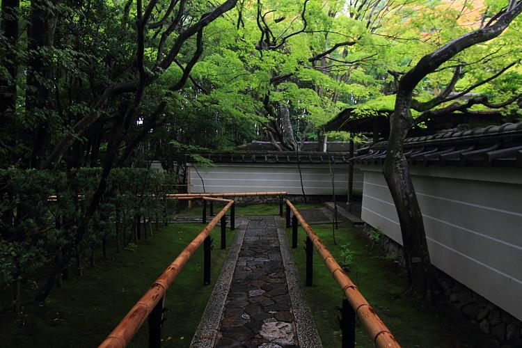 高桐院(大徳寺塔頭)_e0051888_5272088.jpg