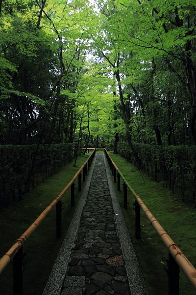 高桐院(大徳寺塔頭)_e0051888_5281018.jpg