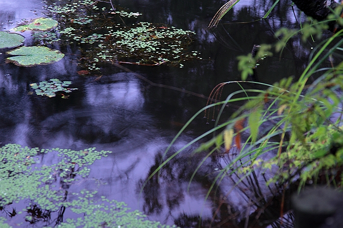 """雨の紅葉谷""_a0140608_6332847.jpg"