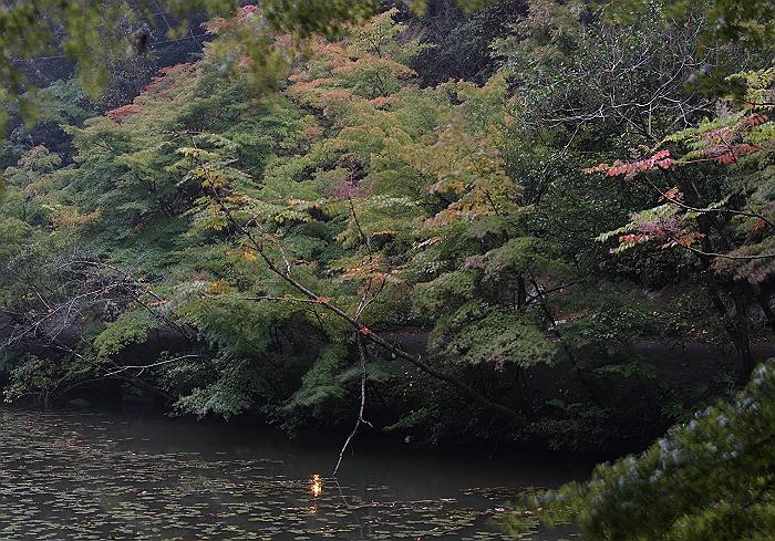 """雨の紅葉谷""_a0140608_636666.jpg"