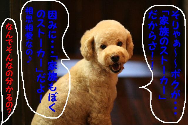b0130018_955505.jpg