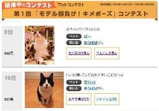 モデル顔負け!キメポーズ猫 空ぽー編。_a0143140_2157365.jpg