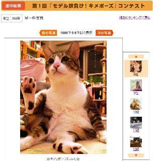 モデル顔負け!キメポーズ猫 空ぽー編。_a0143140_21574891.jpg