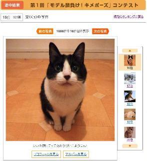 モデル顔負け!キメポーズ猫 空ぽー編。_a0143140_2158066.jpg