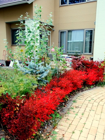 紅葉真っ盛りのマイガーデンとバードフィーダ。_b0165760_205932.jpg