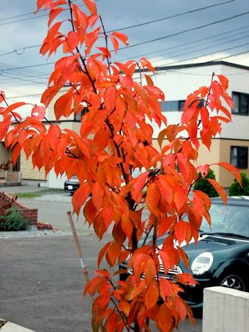 紅葉真っ盛りのマイガーデンとバードフィーダ。_b0165760_20594916.jpg