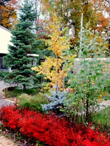 紅葉真っ盛りのマイガーデンとバードフィーダ。_b0165760_2112139.jpg