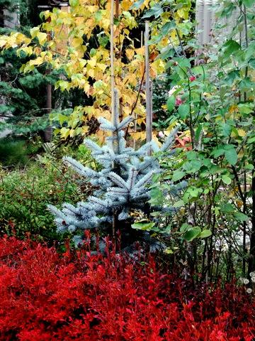 紅葉真っ盛りのマイガーデンとバードフィーダ。_b0165760_2155953.jpg