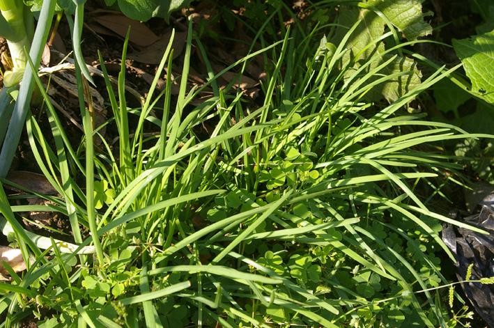 コマツナ初収穫、例年になく野菜順調に成育(10・10・22)_c0014967_2365021.jpg