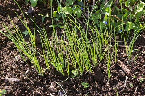 コマツナ初収穫、例年になく野菜順調に成育(10・10・22)_c0014967_2375829.jpg