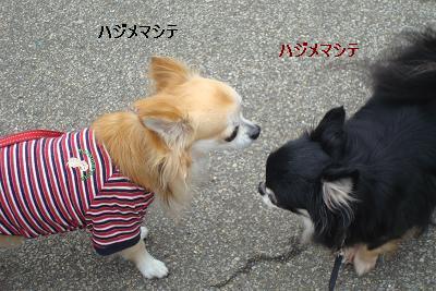 はじめましてと「日比谷公園ガーデニングショー2010」_d0006467_171492.jpg