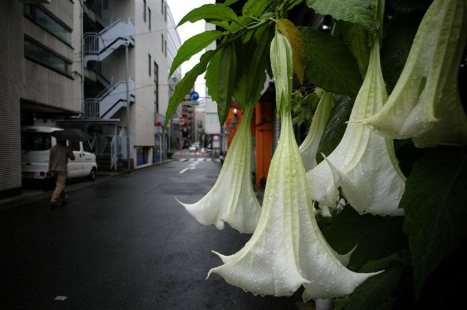 雨の人形町 壱丁目_e0082981_23451956.jpg