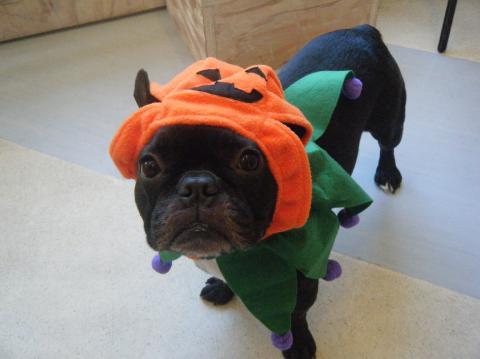 ★Happy Halloween★_b0186183_18252698.jpg