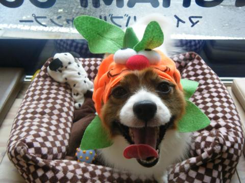 ★Happy Halloween★_b0186183_18255339.jpg