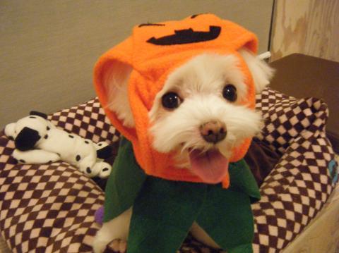 ★Happy Halloween★_b0186183_18263799.jpg