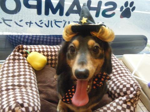 ★Happy Halloween★_b0186183_1827294.jpg