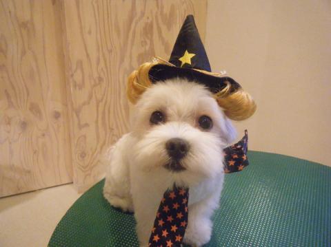 ★Happy Halloween★_b0186183_18274633.jpg