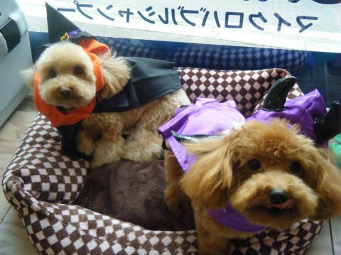 ★Happy Halloween★_b0186183_18292125.jpg
