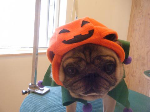 ★Happy Halloween★_b0186183_1829394.jpg