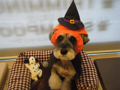 ★Happy Halloween★_b0186183_18295017.jpg
