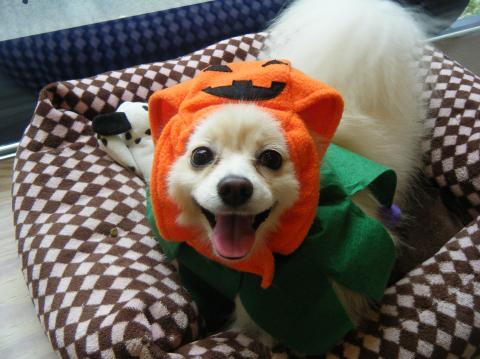 ★Happy Halloween★_b0186183_18301132.jpg