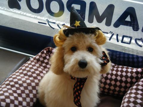 ★Happy Halloween★_b0186183_18303128.jpg