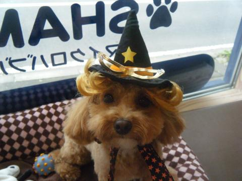 ★Happy Halloween★_b0186183_18305020.jpg