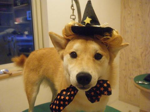 ★Happy Halloween★_b0186183_18314471.jpg