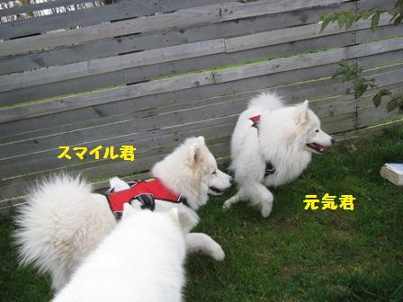 f0212597_10543267.jpg