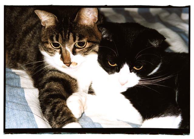 猫って……。_e0044929_21345383.jpg