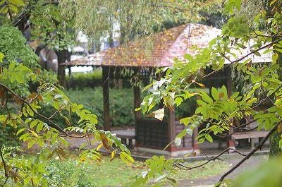 雨の犀川緑地公園を歩く_d0043136_16305522.jpg