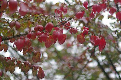 雨の犀川緑地公園を歩く_d0043136_16311647.jpg