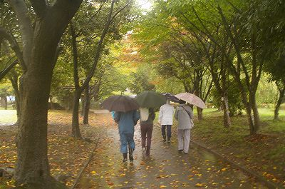 雨の犀川緑地公園を歩く_d0043136_16323836.jpg