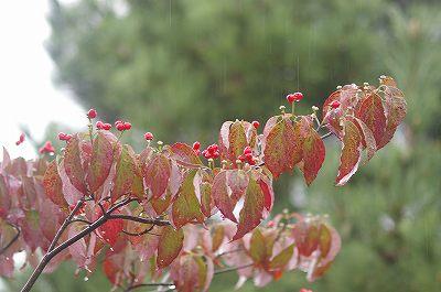 雨の犀川緑地公園を歩く_d0043136_16342488.jpg