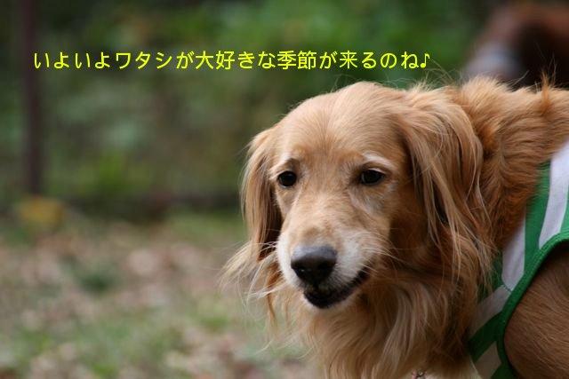 f0039538_2064953.jpg