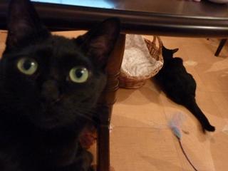 まだかにゃ猫 のぇるろった編。_a0143140_21121154.jpg
