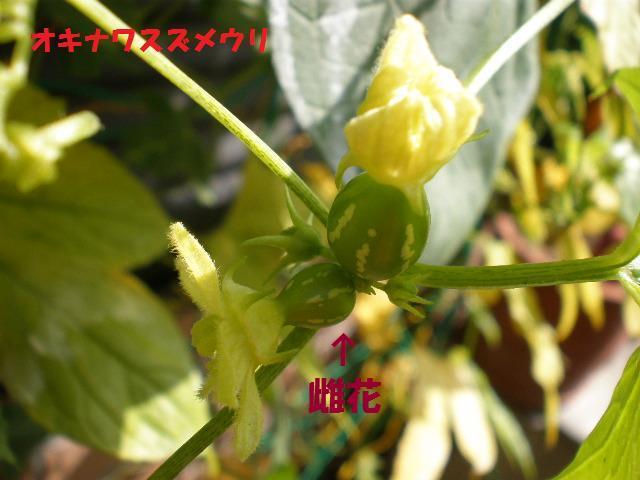 f0236744_155837.jpg