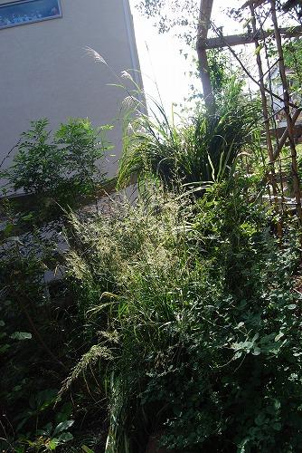10月の庭…_c0124100_0183360.jpg