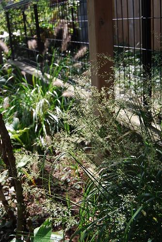 10月の庭…_c0124100_019455.jpg