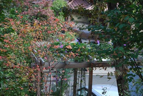 10月の庭…_c0124100_0202710.jpg