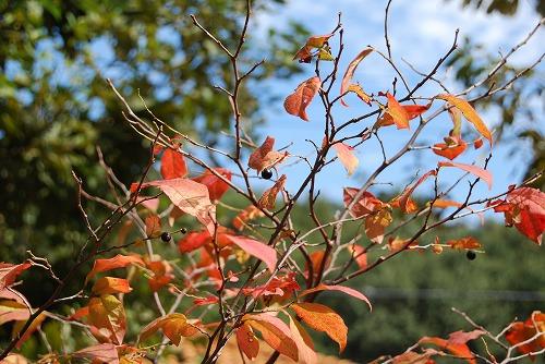 10月の庭…_c0124100_0203734.jpg